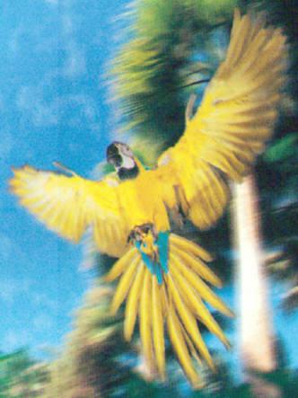 Aves exoticas Gran Canaria