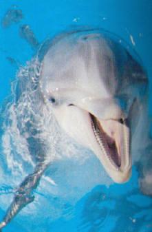 Delfines Gran Canaria, Canarias
