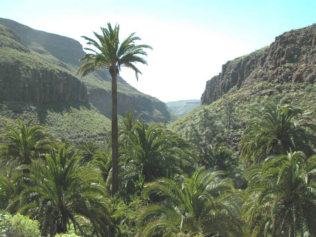 palmerales Canarias