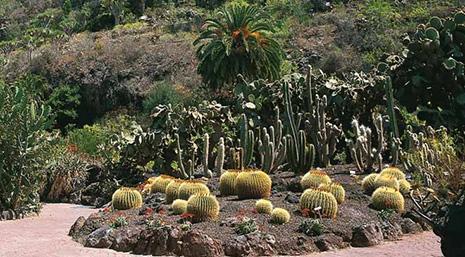 Museos en gran canaria las palmas canarias - Jardin botanico las palmas ...